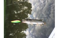 Big Cat Fishing - Mako Scout 7,5гр 04 - фотография пользователя