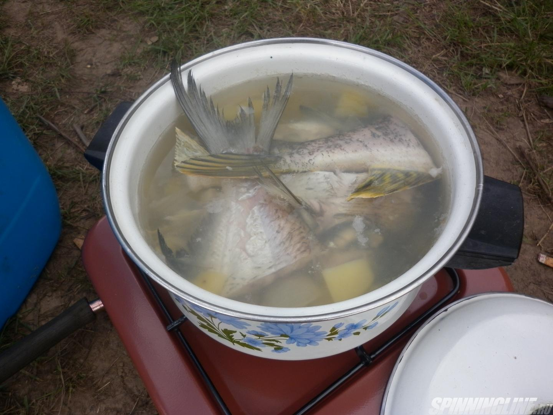 чеснок прикормке рыбы