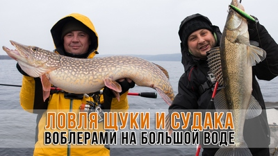 spinningline.ru/uploads/images/pike_zander_16012017.jpg