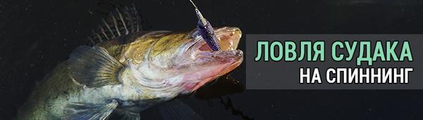 spinningline.ru/uploads/images/sudak_10102018.jpg